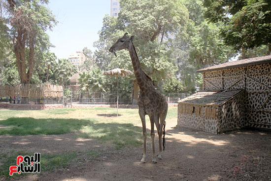 صور حديقة الحيوان و الفسطاط (31)