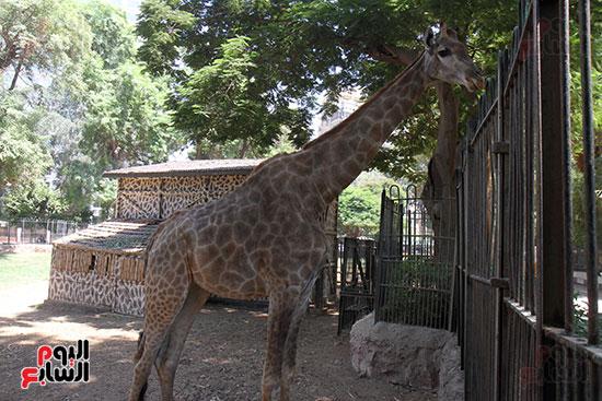 صور حديقة الحيوان و الفسطاط (30)