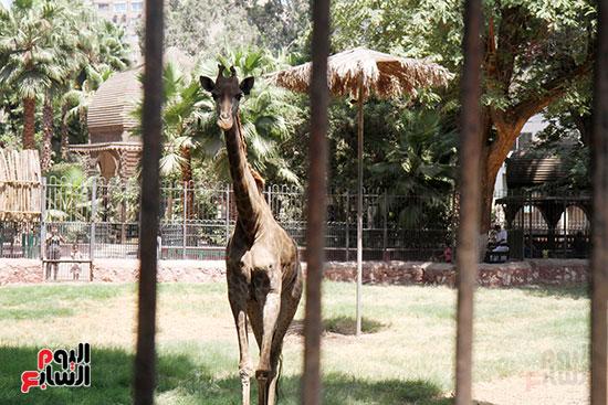 صور حديقة الحيوان و الفسطاط (28)