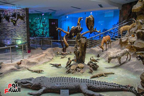 المتحف الحيوانى1