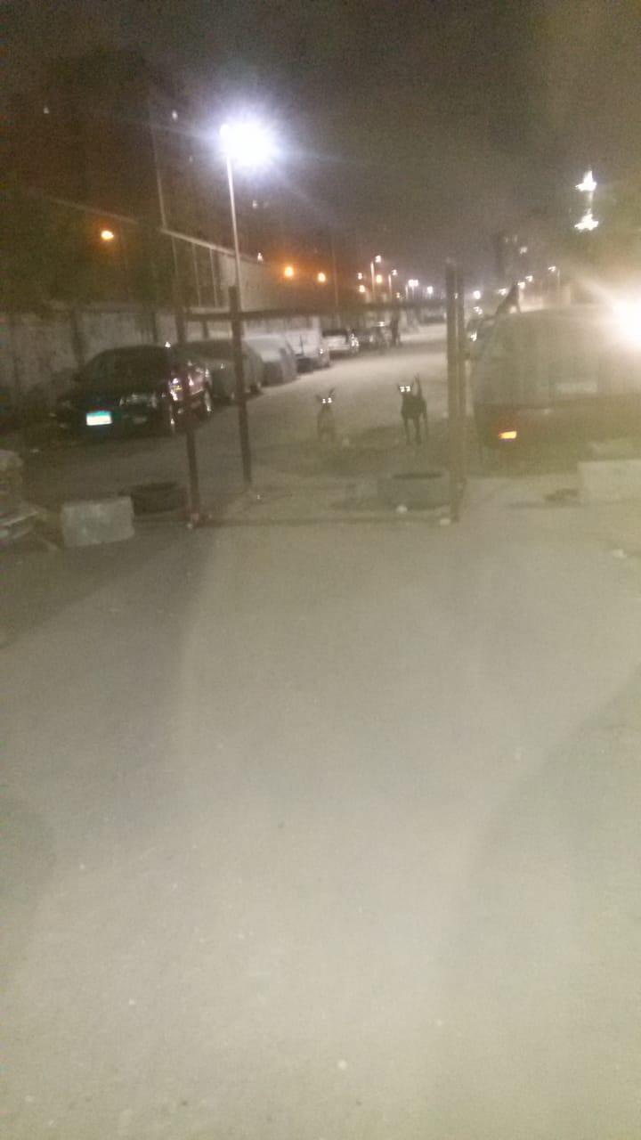 غلق شارع فى المطرية وتاجيره  الى ساحة انتظار سيارات  (2)
