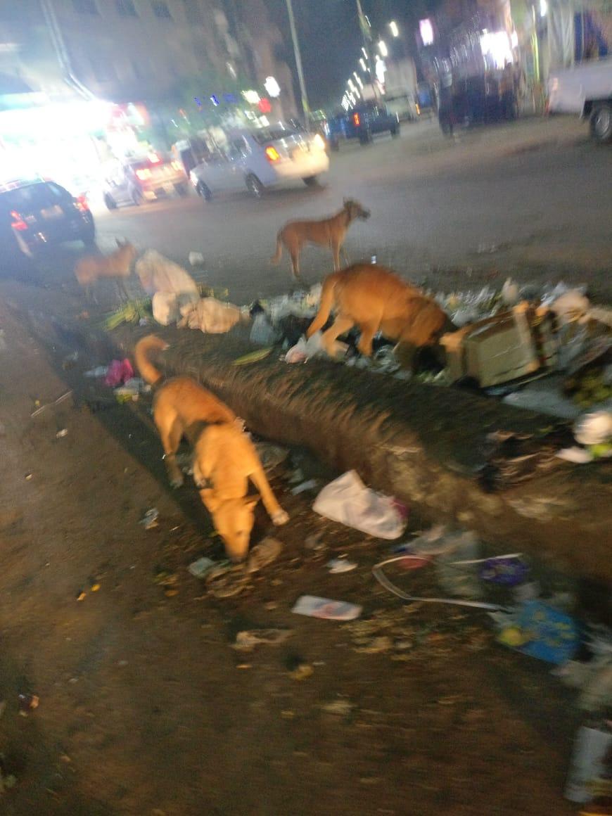 انتشار الكلاب الضالة بأعداد كبيرة بمنطقة