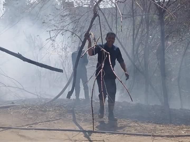 السيطرة على حريق بأشجار مجمع مواقف ملوى (2)