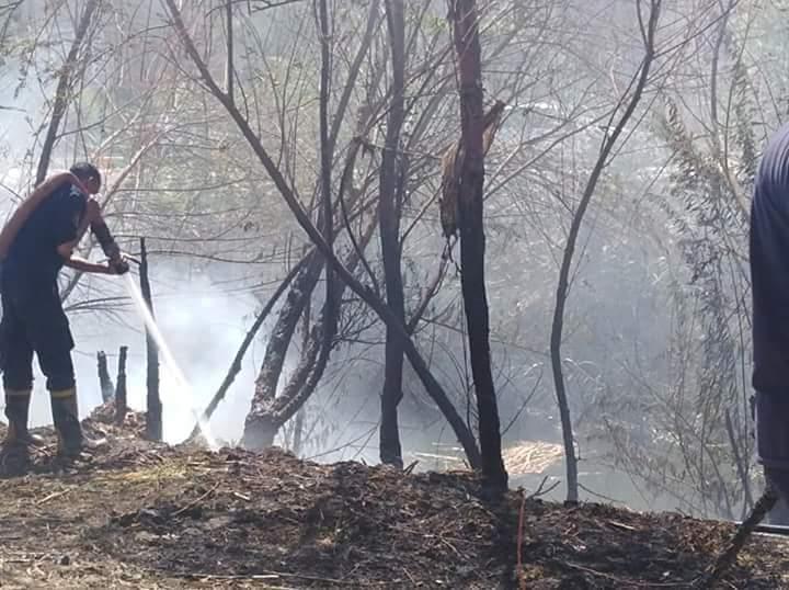 السيطرة على حريق بأشجار مجمع مواقف ملوى (3)
