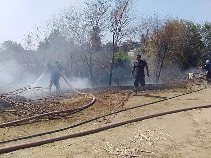 السيطرة على حريق بأشجار مجمع مواقف ملوى (1)