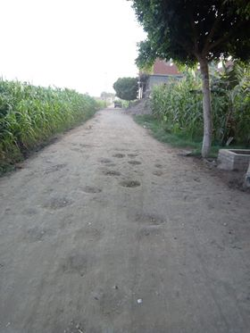 طريق عزبة الجيارين بالبحيرة  (1)