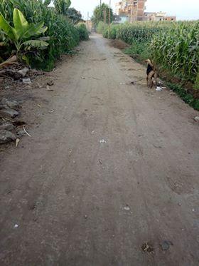 طريق عزبة الجيارين بالبحيرة  (2)
