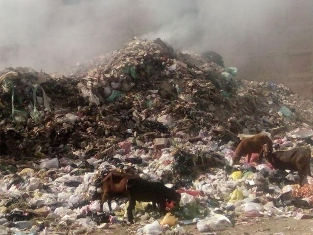 تحويل أرض مجمع مدارس إلى مقلب قمامة بشارع العشرين فى فيصل  (4)