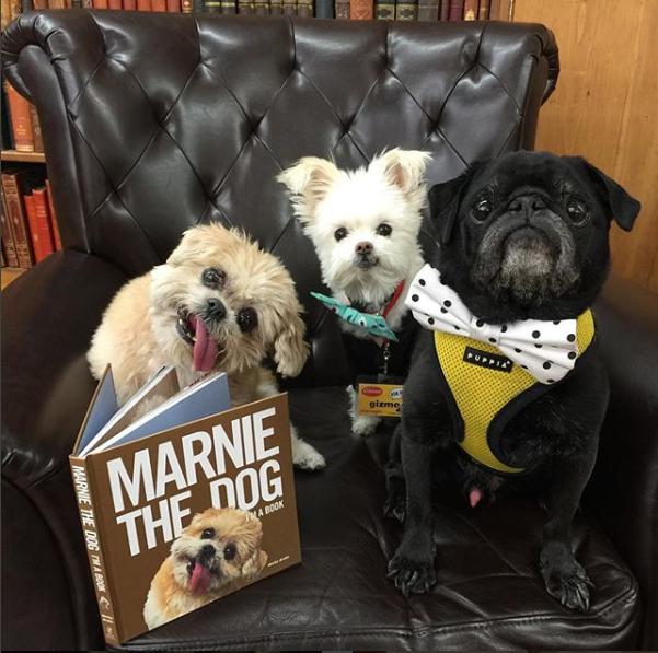 مارنى مع مجموعة من الكلاب