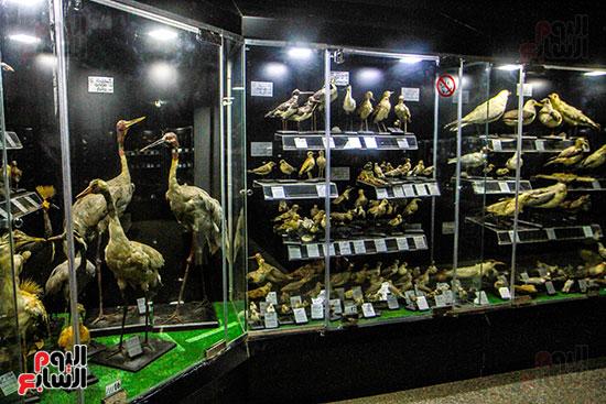 الطيور المحنطة بالمتحف الحيوانى