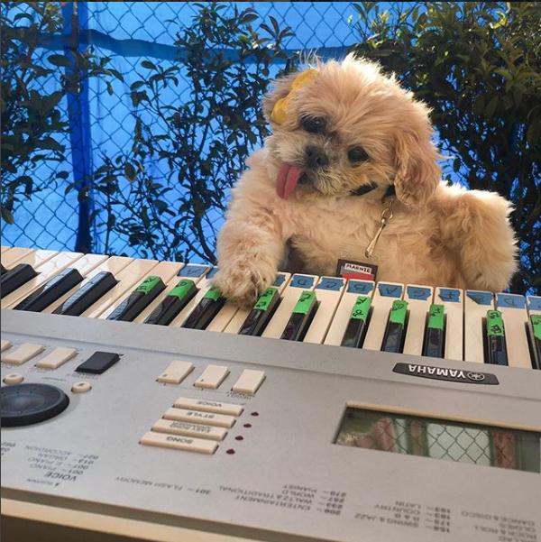 تعزف البيانو