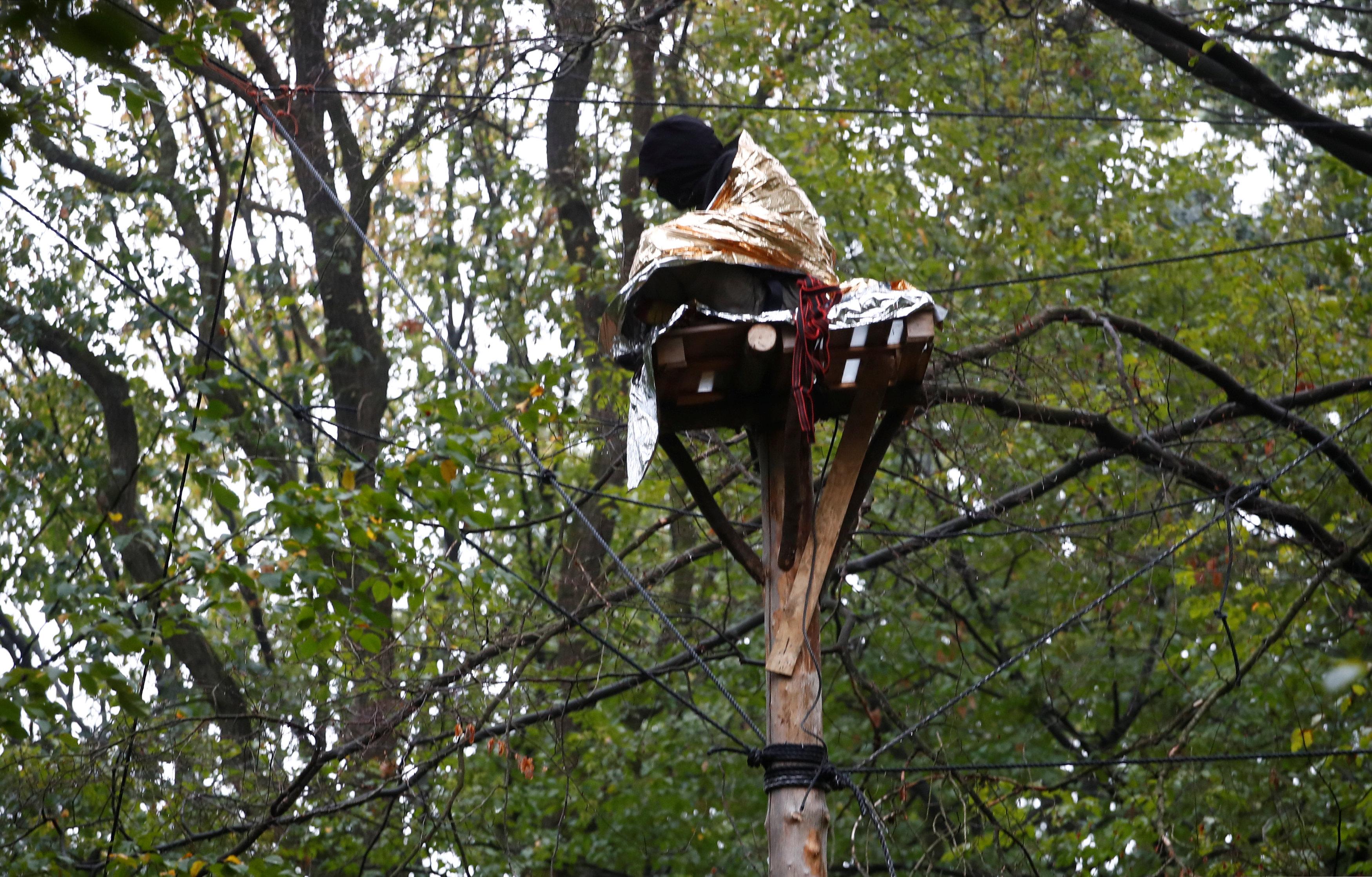 أحد المتظاهرين أعلى أحد الأشجار بالغابة