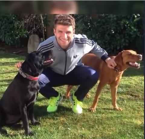 """أشهر 10 كلاب يمتلكها لاعبو كرة القدم.. ميدو يعشق """"جريت دان ..."""