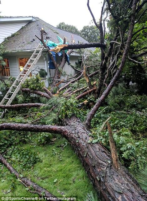 أشجار ضخمة لم تصمد فى وجه الرياح القوية