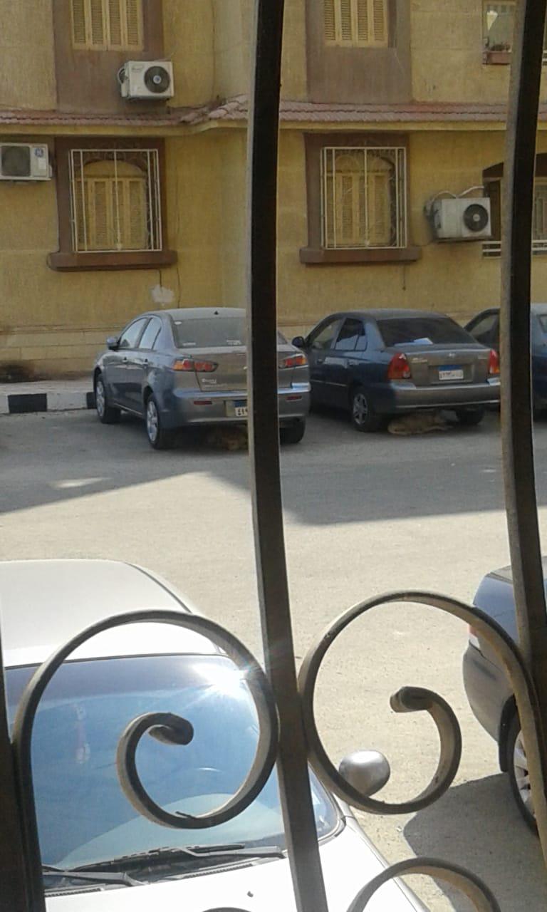 الكلاب الضالة أسفل السيارات بمساكن الضباط (1)