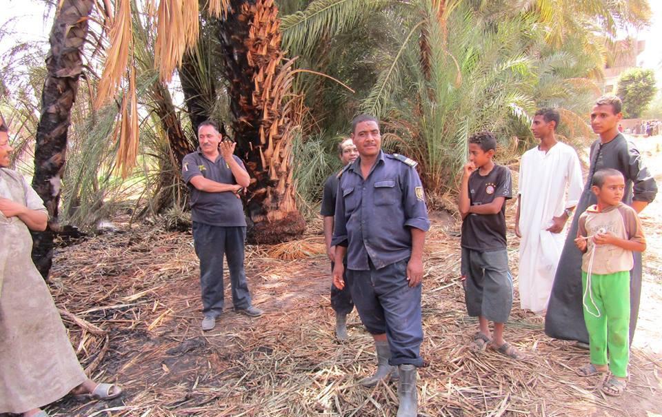 السيطرة علي حريق إلتهم عدد من أشجار النخيل بقرية السريب بإسنا (2)