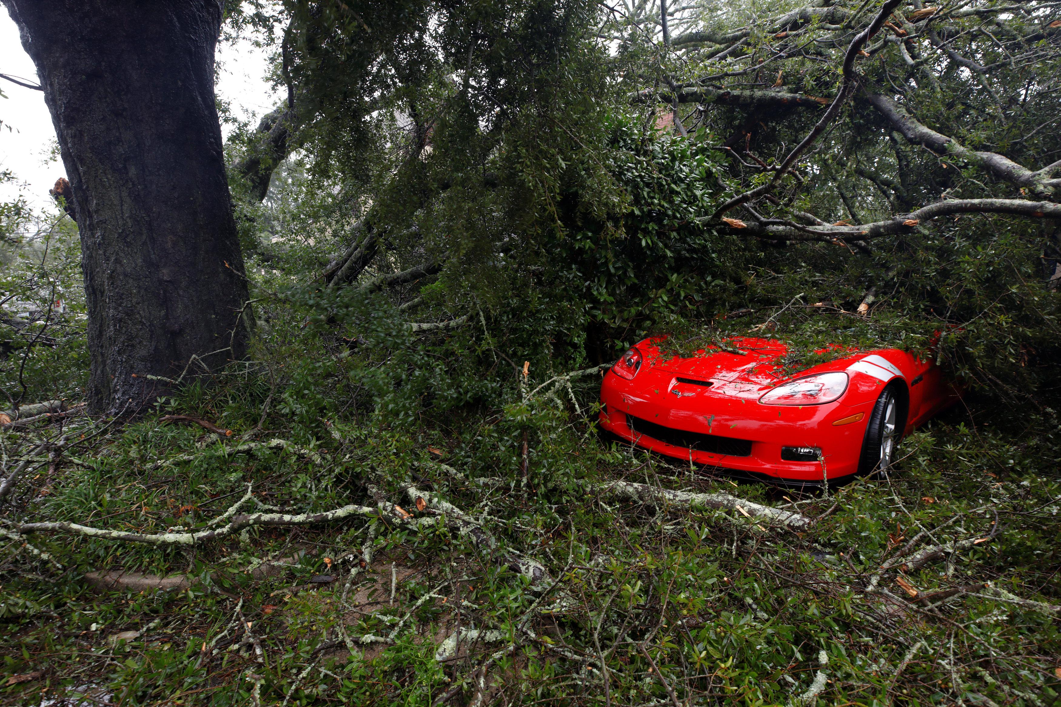 شجرة تسقط على أحد السيارات
