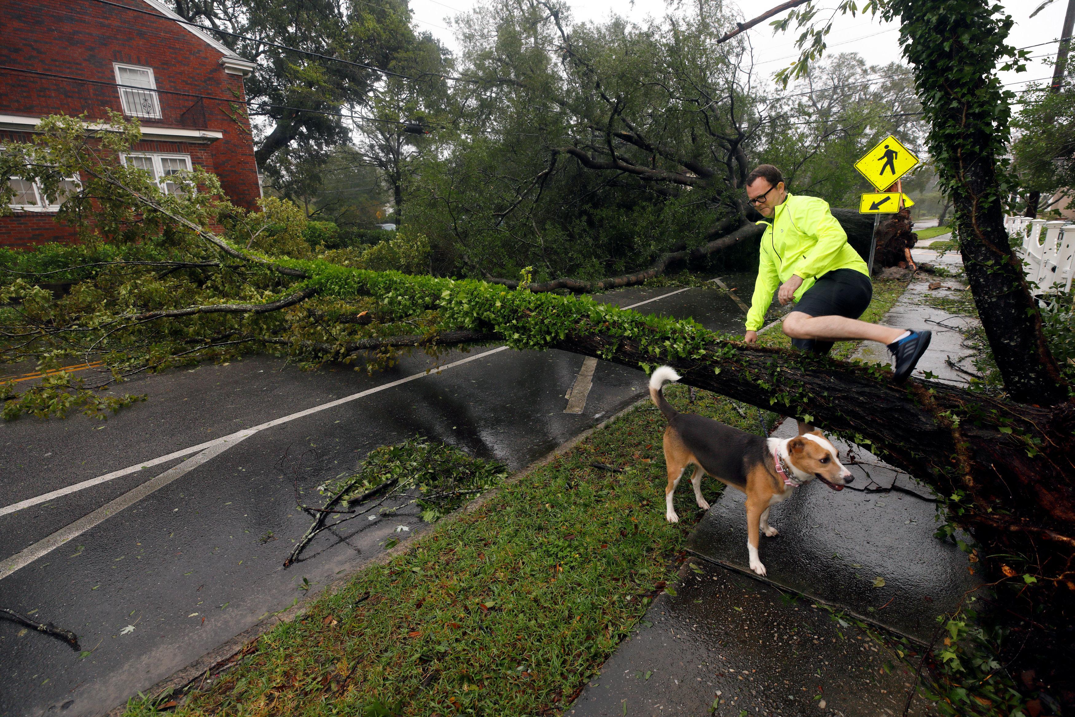 شجرة تقطع احد الطرق بالولايات المتحدة