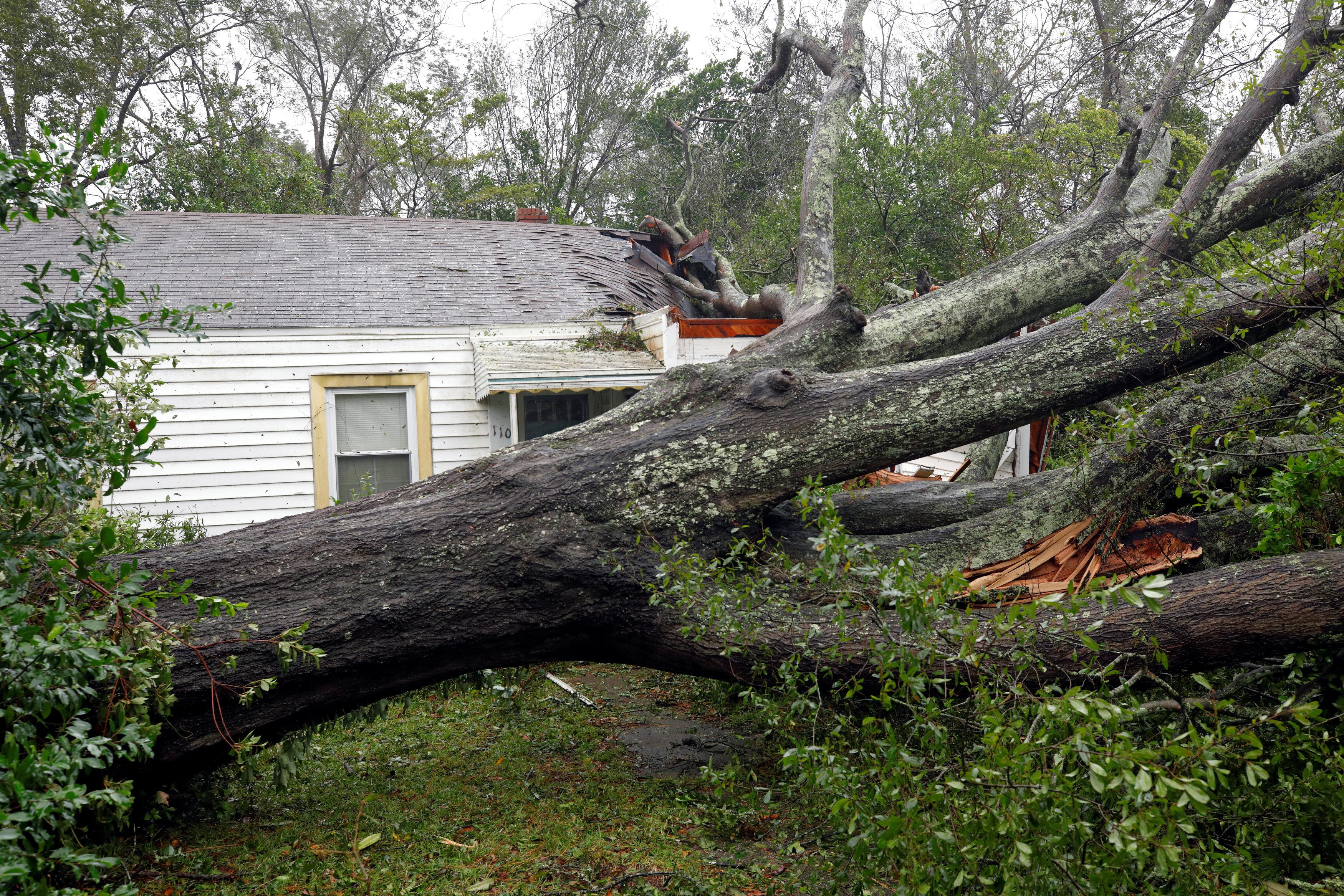 سقوط شجرة نتيجة الاعصار