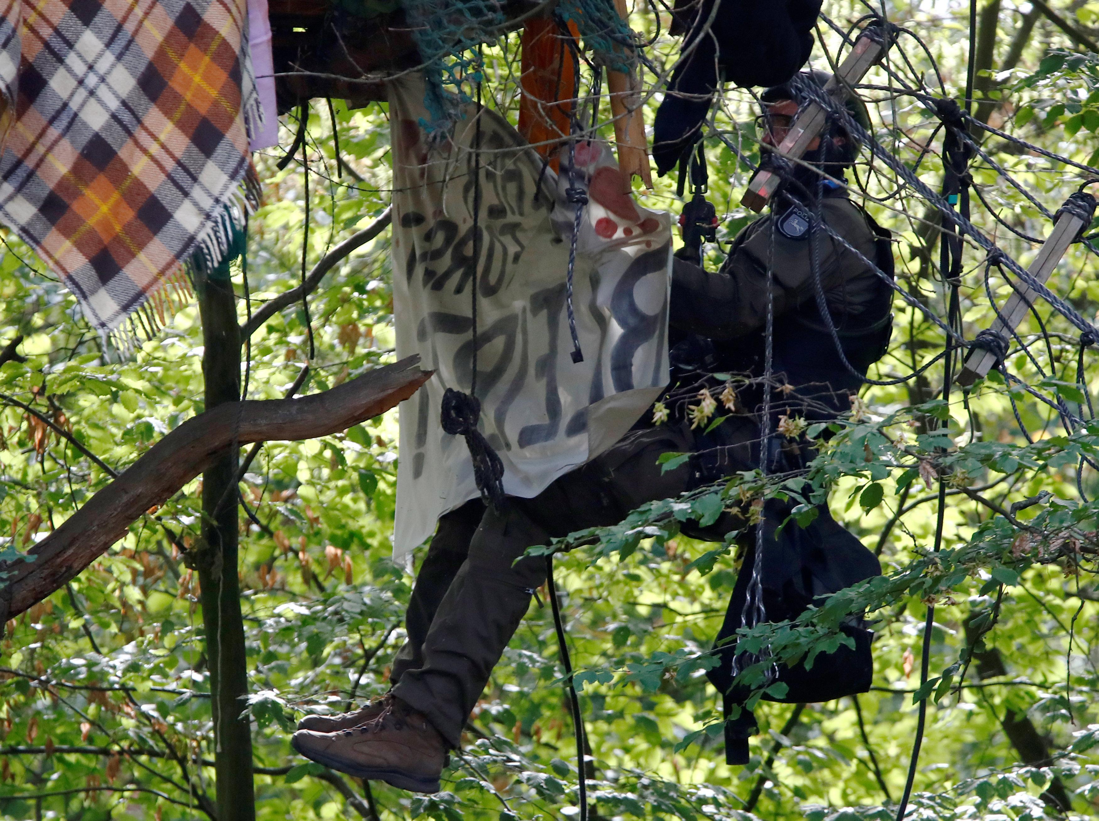 فرد من الشرطة الألمانية يتسلق فوق أحد أشجار الغابة لإزالة اللافتات