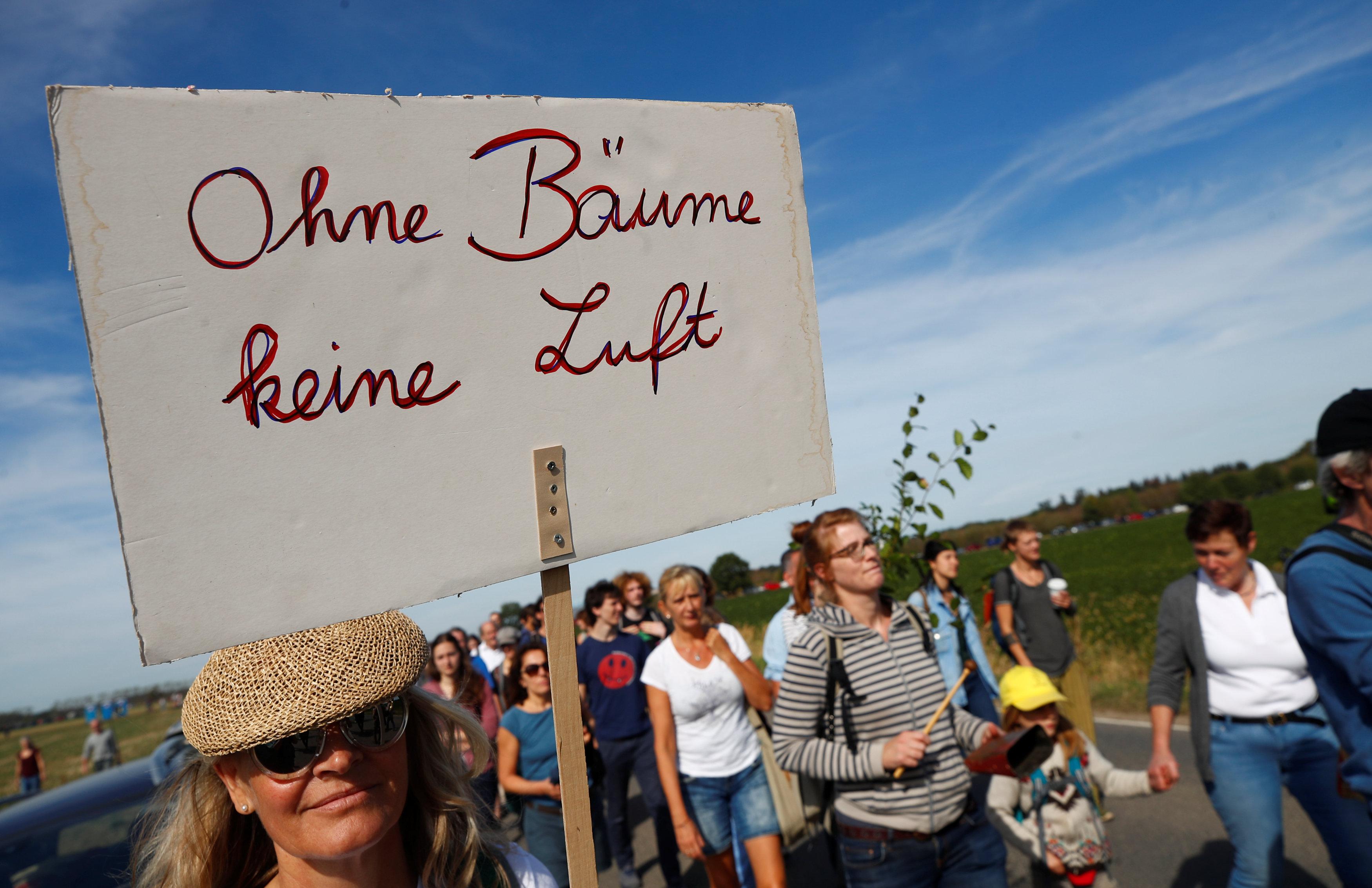 لافتات مناهضة للإجراء الحكومى بإزالة أحد الغابات
