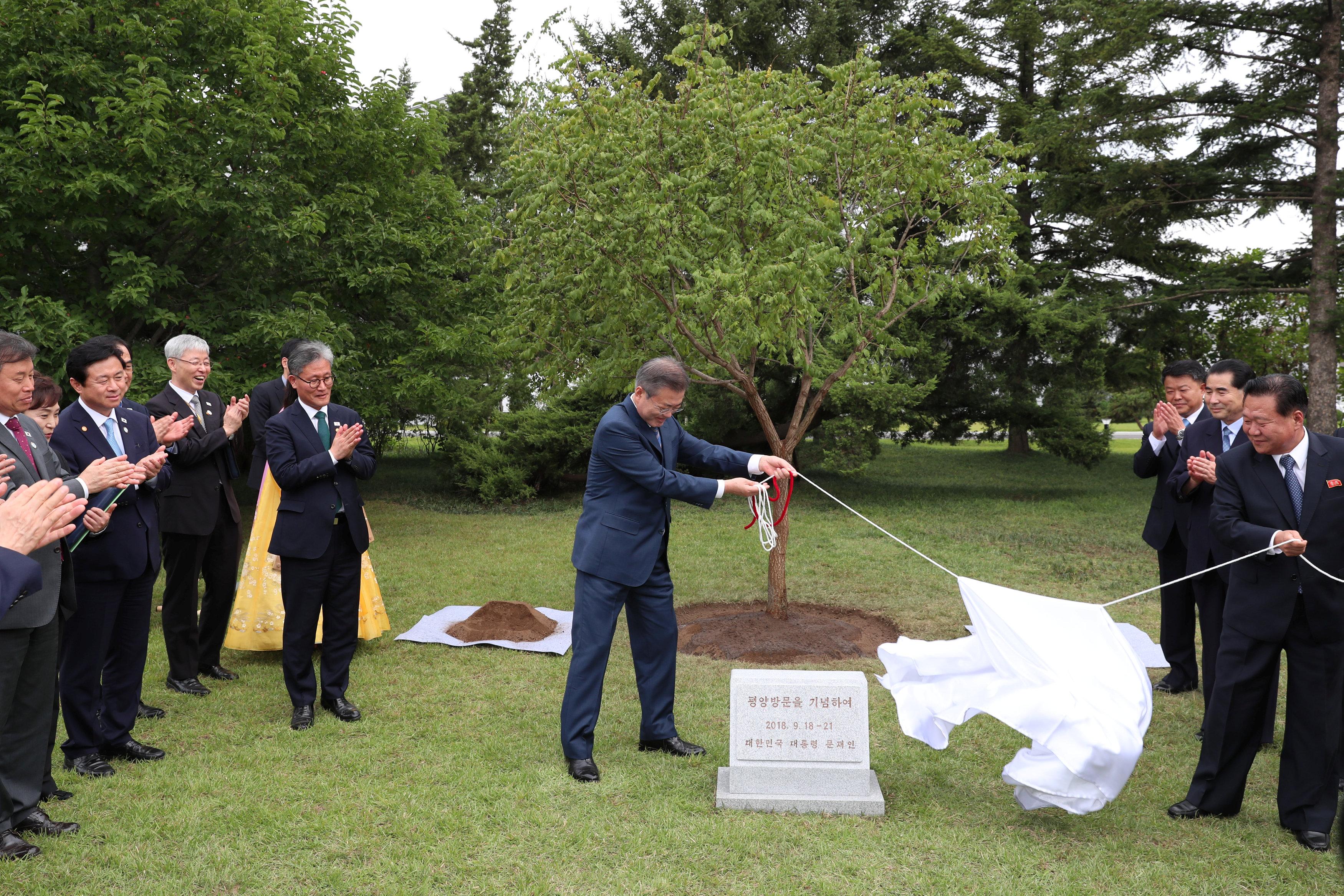 رئيس كوريا الجنوبية يزيح الستار عن شجرة تذكارية بمناسبة زيارته التاريخية لبيونج يانج
