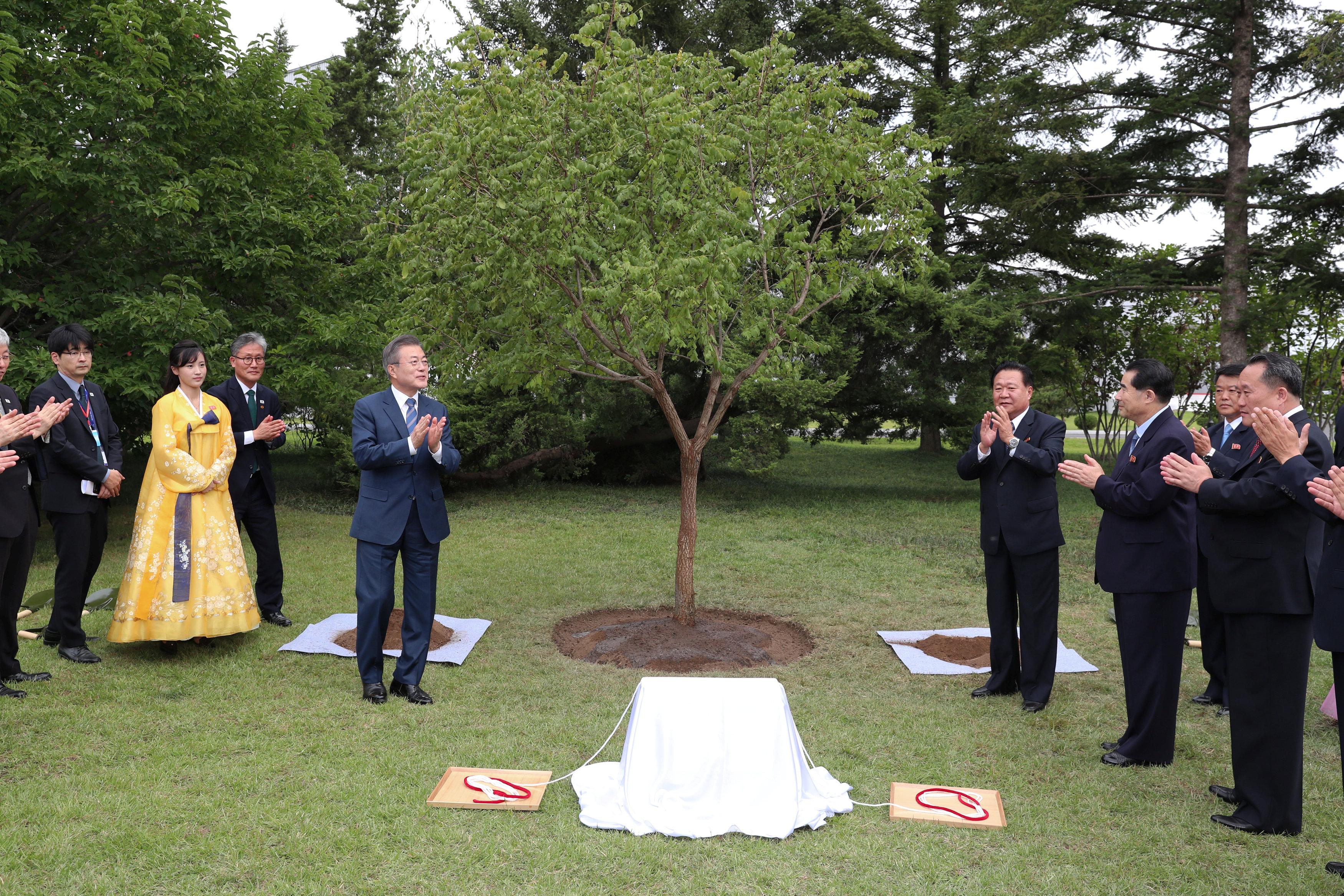 الرئيس الكورى الجنوبى أثناء إزاحة الستار عن شجرة تذكارية فى بيونج يانج