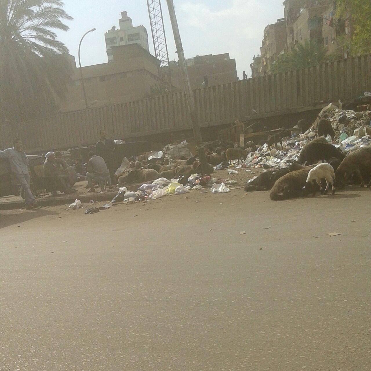 نتشار الكلاب الضالة بسبب تراكم القمامة فى شوارع المطرية  (1)