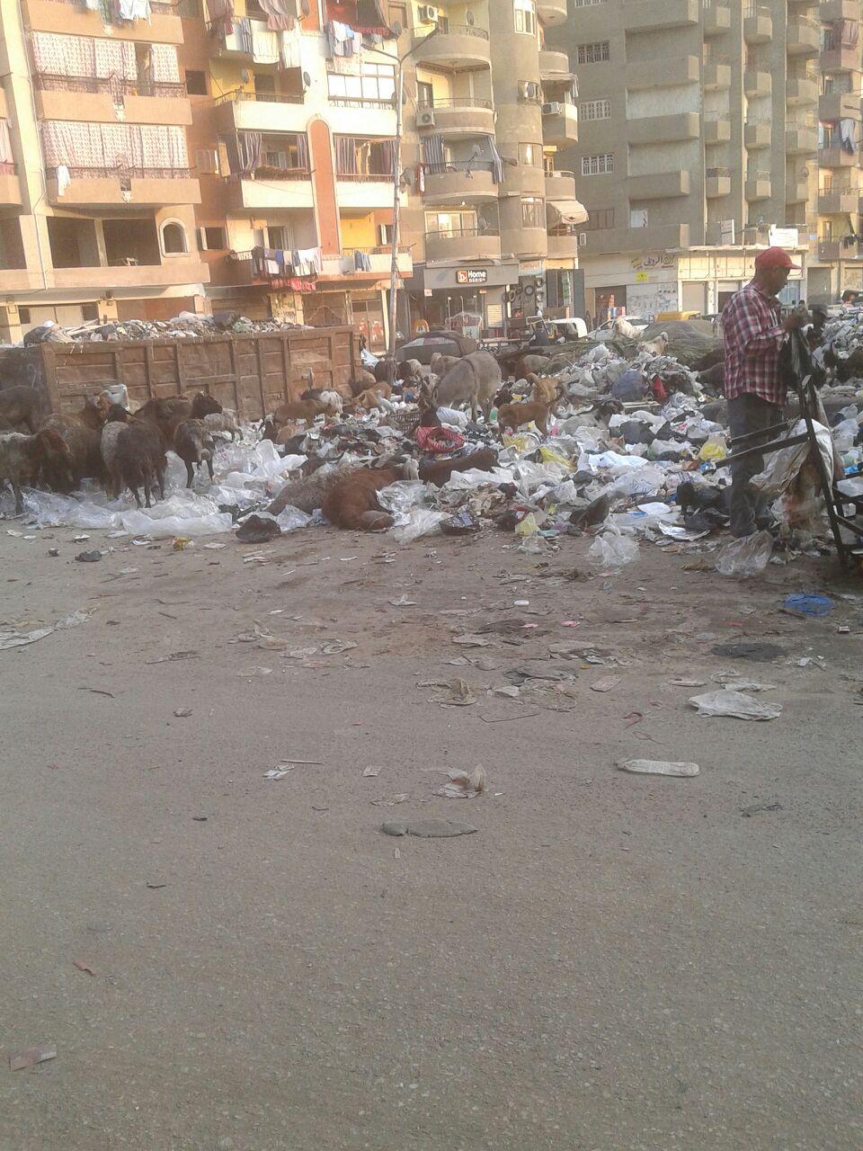 نتشار الكلاب الضالة بسبب تراكم القمامة فى شوارع المطرية  (2)