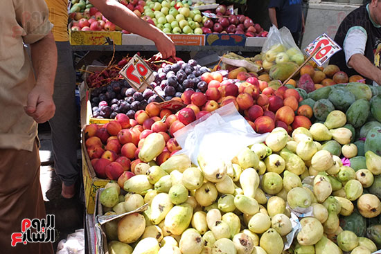 Vans for cutting fruit (3)