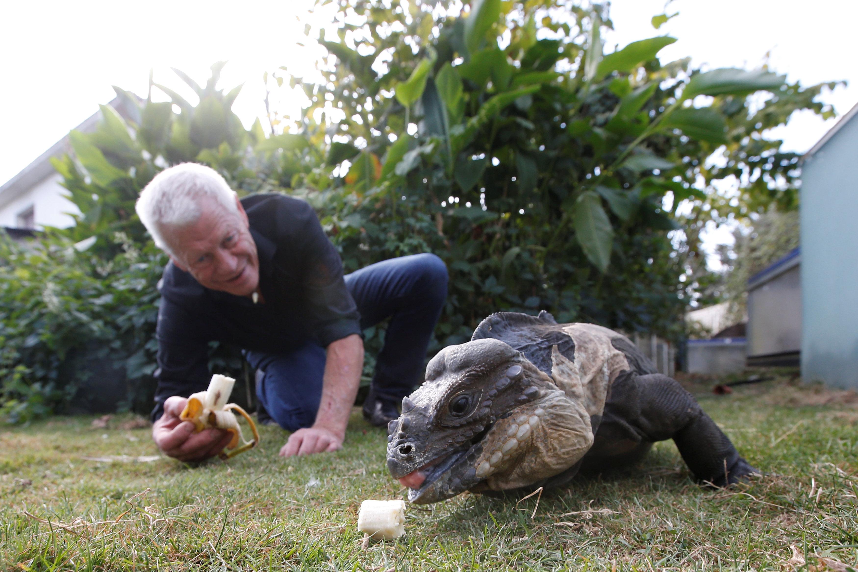 فيليب جيليت يطعم أحد الحيوانات فى حديقة منزله