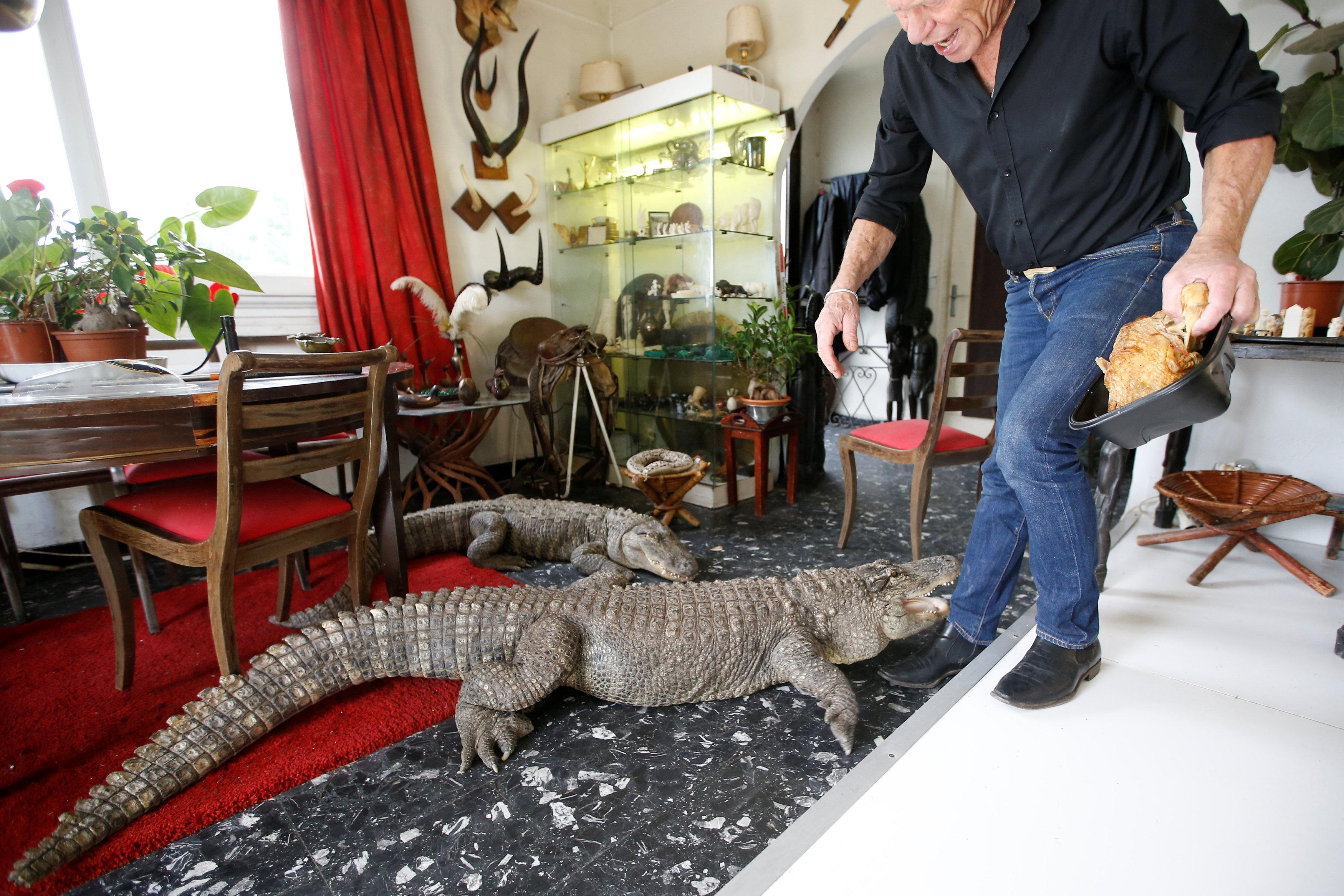 جيليت يداعب حيواناته