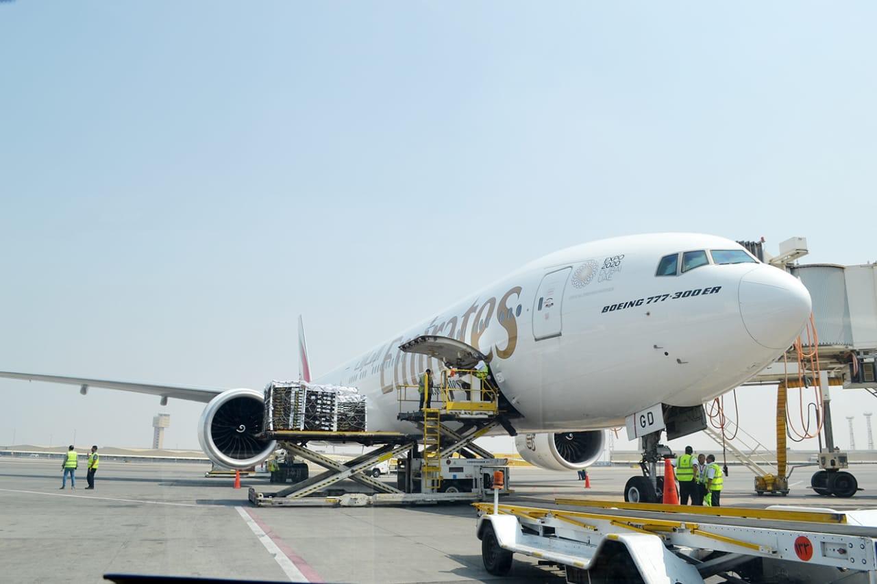 مصر للطيران (2)