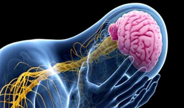 علاجات تكميلية لضمور المخ