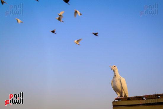 تربية الطيور (24)