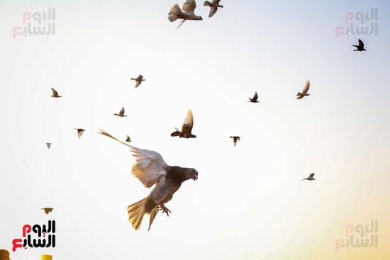 تربية الطيور (3)