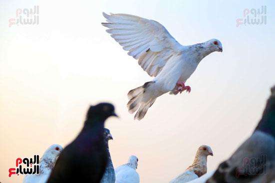 تربية الطيور (17)