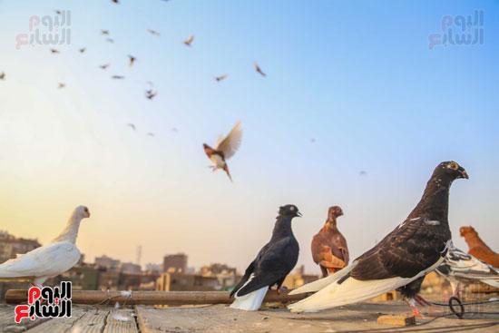 تربية الطيور (25)