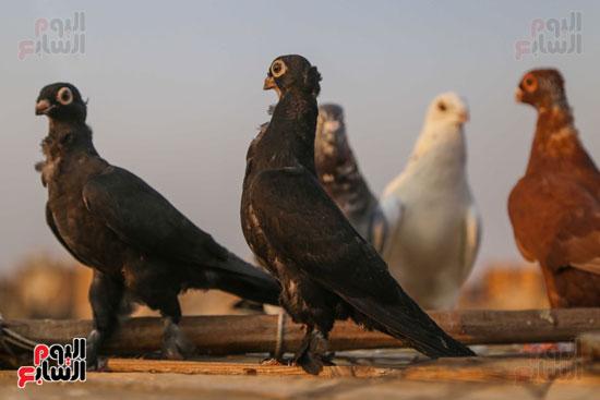 تربية الطيور (22)