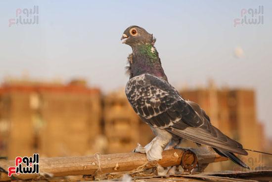 تربية الطيور (23)
