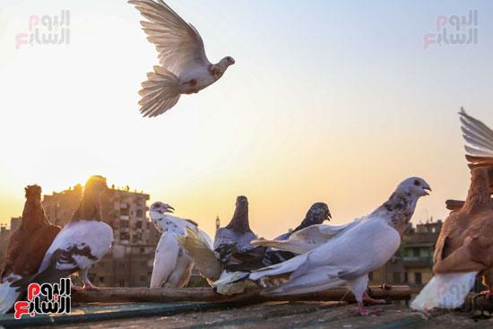 تربية الطيور (1)