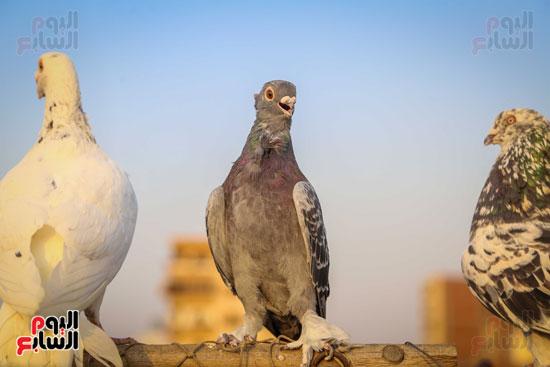 تربية الطيور (21)