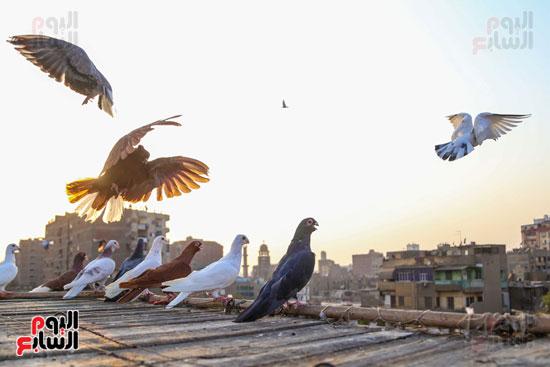 تربية الطيور (20)