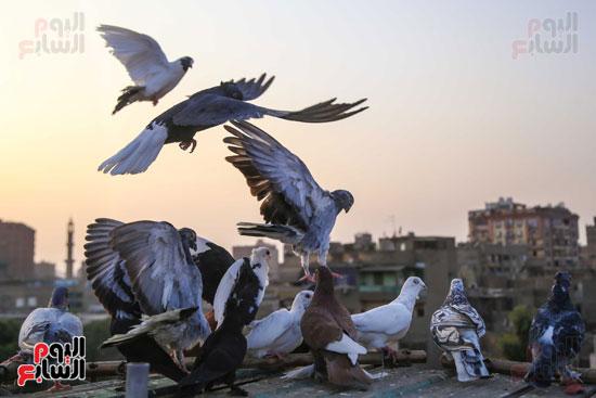 تربية الطيور (11)