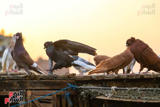 تربية الطيور (16)