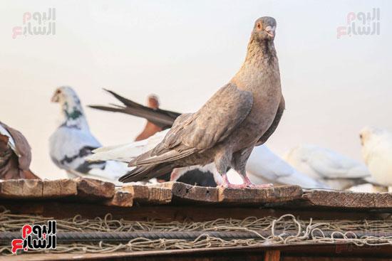 تربية الطيور (8)