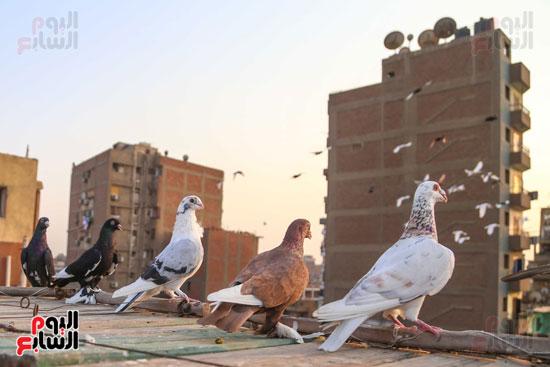 تربية الطيور (4)