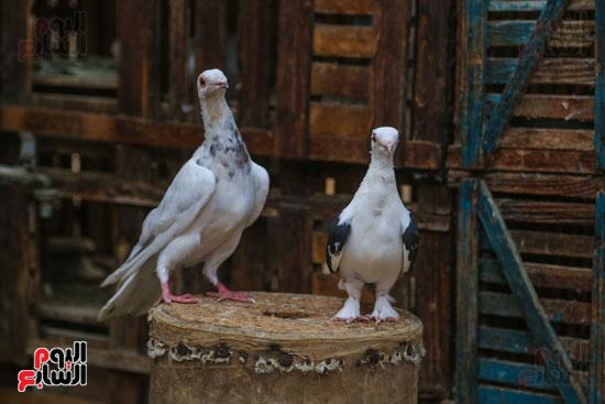 تربية الطيور (13)