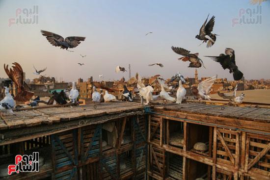 تربية الطيور (10)