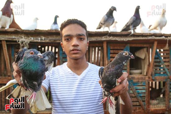 تربية الطيور (14)
